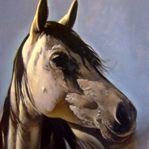 Horse Study. Oil On Panel 70 x 50 cm