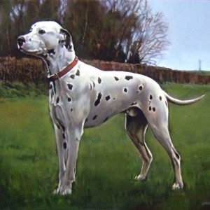 Dalmation. Oil On Canvas 100 x 70 cm