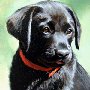 Labrador Puppy. Oil On Canvas 40 x 30 cm