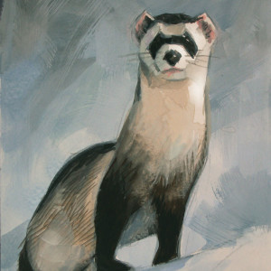 Snow Ferret. Gouache On Paper 30 x 20 cm