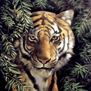 Tiger 1. Oil On Canvas 70 x 50 cm